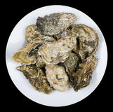 Oysters. A pile of Fine de Claire oysters Royalty Free Stock Images