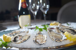 Free Oysters Stock Images - 9107744