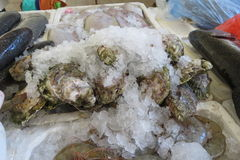 Oysters Austern Royalty Free Stock Photos