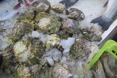 Oysters - Austern Royalty Free Stock Images