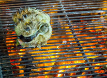 Oysters Barbecue Grill cooking seafood. Royalty Free Stock Image