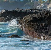 Oysters and Barnacles on the California Coast Royalty Free Stock Images