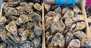 Oysters in the basket. On display at Trouville, France Royalty Free Stock Image