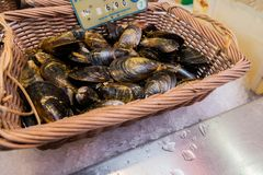 Oysters in the basket with the price in the shop on the street market royalty free stock image