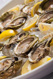 Oysters in a bowl Royalty Free Stock Photography