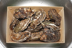 Oysters in Box Royalty Free Stock Photo