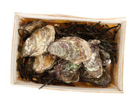 Oysters box Royalty Free Stock Photo