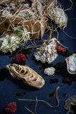 Oysters in a box, seafood market. Royalty Free Stock Photography