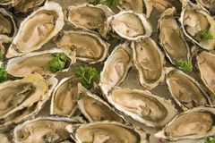 Oysters for Breakfast Stock Photography