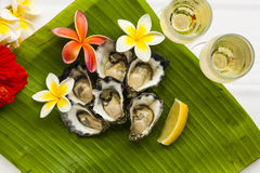 Oysters and champagne Stock Image