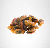 Oysters or Chinese style sun dried oysters on background. Royalty Free Stock Photography