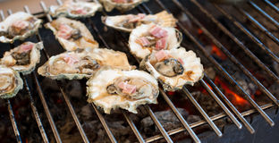 Oysters are cooked on the grill Stock Image