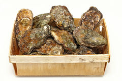 Oysters crate Royalty Free Stock Photo