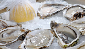 Oysters, delicacy Royalty Free Stock Images
