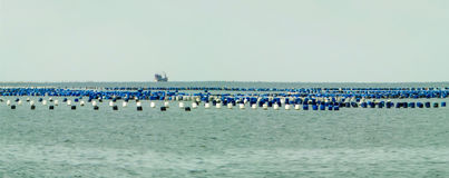Oysters farm on plastic tank buoy in the sea panorama royalty free stock photo