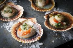 Oysters. Fine oysters in its shell stock images