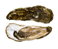 Oysters (Fines de Claire) Stock Image