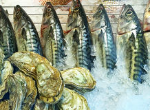 Oysters and fishes in display at fish market. Bunch of oysters and raw mackerels on ice at the market stall Royalty Free Stock Photo