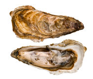 Oysters, four seasons Royalty Free Stock Image