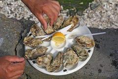 Oysters2 frais Photo libre de droits