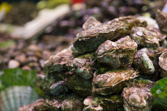 Oysters. Frech oysters for sell in the market Stock Photo