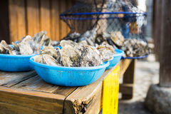 Oysters. Fresh catch of healthy oysters Stock Photography
