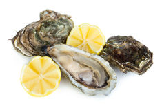 Oysters. Fresh raw oysters with lemon slices isolated on white background Stock Image