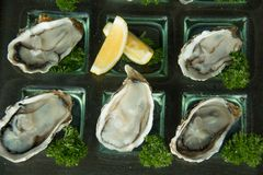 Oysters on glass plate with spicy sauce. Opened Oysters on glass plate with spicy sauce Royalty Free Stock Photo