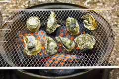 Oysters on the Grill in outdoor Stock Photo