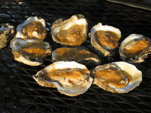 Oysters on the Grill Royalty Free Stock Photography