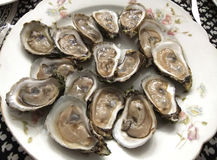 Oysters on the half shell. Big plate of raw oysters on the half-shell Royalty Free Stock Photos