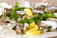 Oysters on the Half Shell Stock Photos
