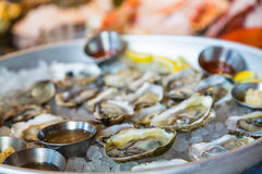 Oysters on Half Shell on Ice Royalty Free Stock Photos
