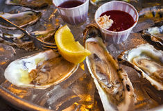Oysters on half shell Royalty Free Stock Image