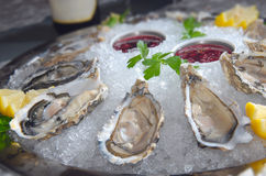 Oysters in ice Stock Photography