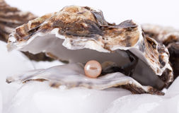 Oysters on ice Stock Photos