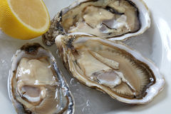 Oysters on ice. Three oysters and a lemon on ice Stock Photography