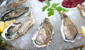 Oysters in ice Stock Images