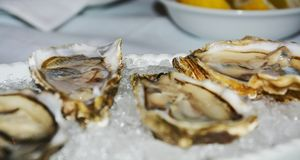 Oysters and ice background, close up Stock Photo