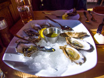 Oysters on the Ice. Launch Plate. Fresh oysters in the restaurant. Delicious Stock Photography