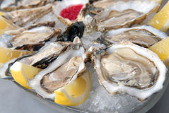 Oysters in ice with a lemon Royalty Free Stock Photos