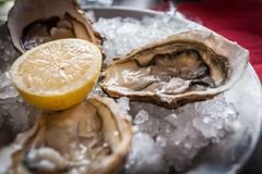 Oysters with ice and lemon.  Royalty Free Stock Images