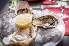 Oysters with ice and lemon.  Stock Photos
