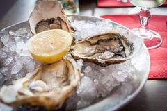 Oysters with ice and lemon.  royalty free stock photo