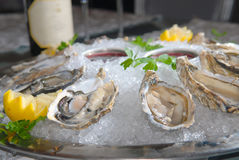 Oysters in ice with a lemon Stock Images