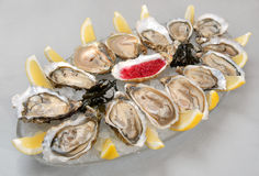Oysters in ice with a lemon Royalty Free Stock Photo