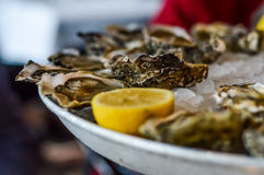Oysters, ice and lemon on a metal plate Stock Image