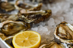 Oysters, ice and lemon on a metal plate Royalty Free Stock Image