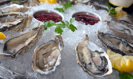 Oysters in ice with a lemon Royalty Free Stock Image