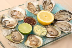 Oysters in ice with a lemon Stock Image